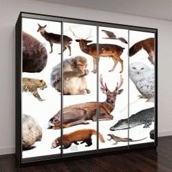 """Шкаф купе с фотопечатью """"коллекция различных птиц, млекопитающих и рептилий из Азии на белом фоне"""""""