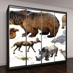 """Шкаф купе с фотопечатью """"Множество различных азиатских изолированные диких животных, включая птиц, млекопитающих, рептилий и насекомых"""""""