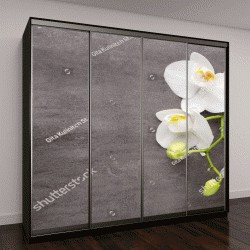 """Шкаф купе с фотопечатью """"Белая орхидея на сером фоне"""""""