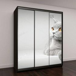 """Шкаф купе с фотопечатью """"Британская короткошерстная кошка лежит на белом столе"""""""
