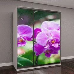 """Шкаф купе с фотопечатью """"Удивительные розовые орхидеи """""""